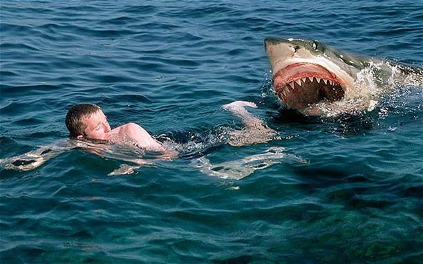 Experts advise avoiding swimming when it's dark or at twilight when sharks are most active and visibility is poor