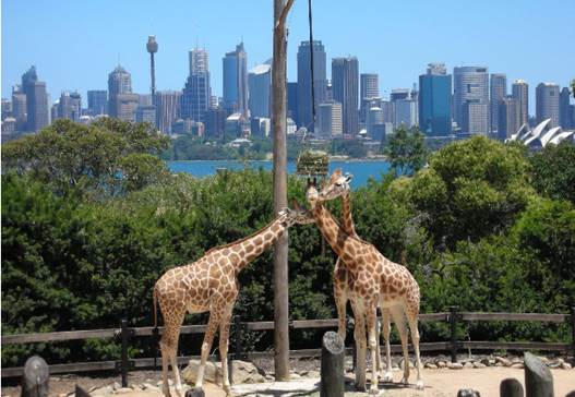 Taronga Zoo is just over 21 hectares of beautiful waterfront land