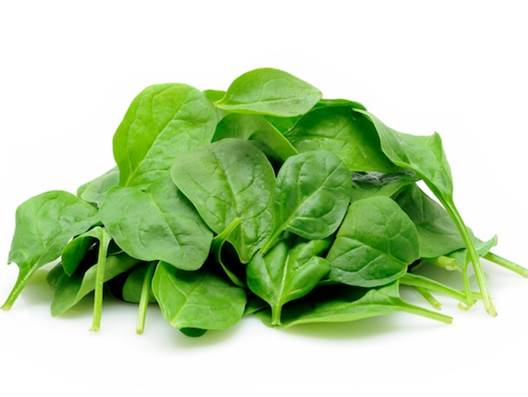 Spinach is an annual, environmentally friendly and edible flowering plant.