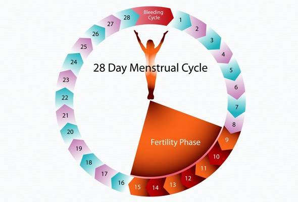 Description: 28-day cycle is just the average.