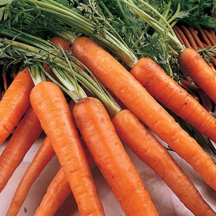 You can let them begin to eat with sweet vegetables such as carrot…