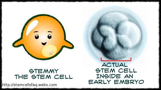 Description: Stem cells for life