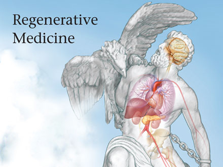 Description: regenerative medicine
