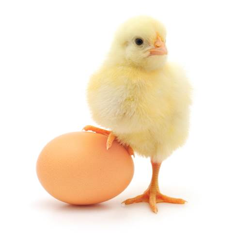 Chicken eggs contain more nutrients than other foods.