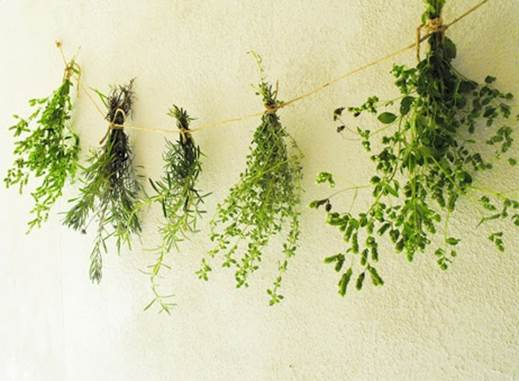 And modern science is catching up - research increasingly backs the use of herbs in protecting us against disease and easing discomfort.