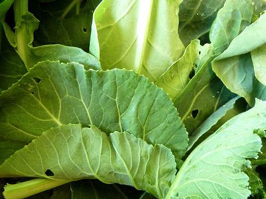 Collard greens has more calcium than other green-leaf vegetables.