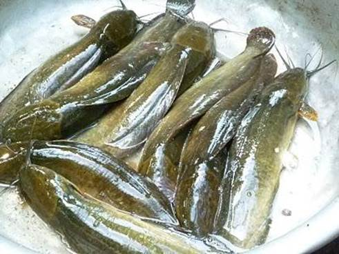 You can use catfish to cook soup with blood pudding and black bean to cure dark circles around eyes.