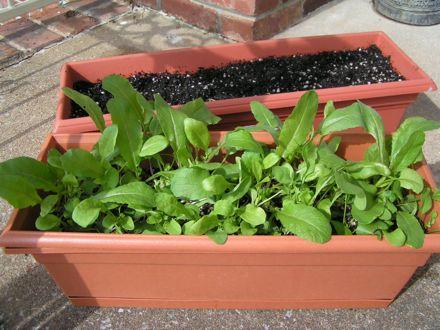 Description: Window-box salads