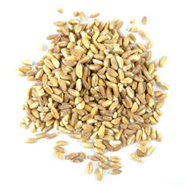 Description: Farro grain