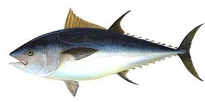 Description: Oily fish