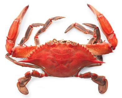 Description: Crab