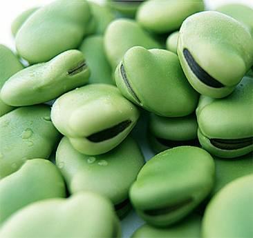 Description: Broad beans