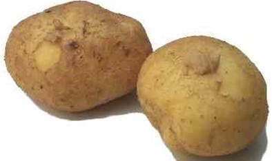 Description: New potatoes