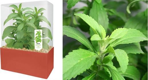 Description: Mixture of Stevia