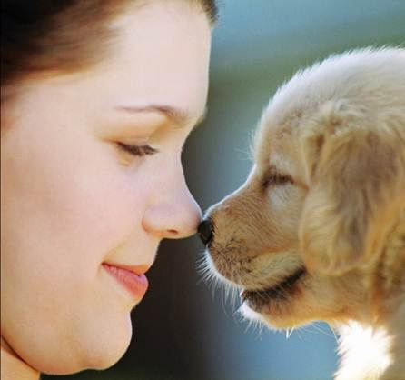 Description: Pets not only bring joy to life but also help to improve owners' health