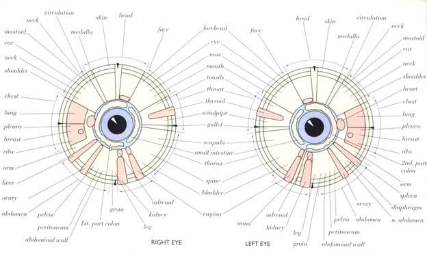 Description: The Iris Chart