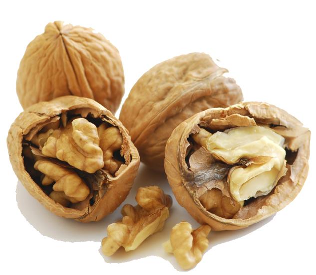 Description: Food focus: Walnuts