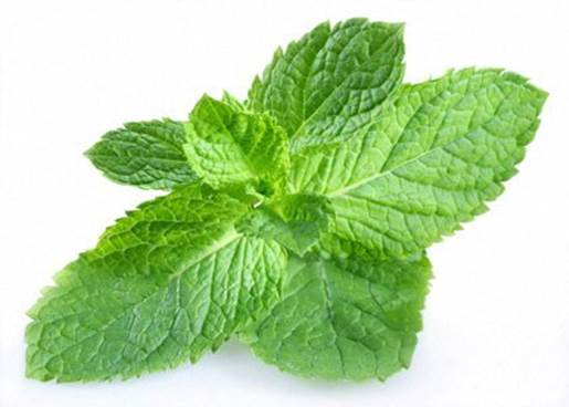 Mint leave can reduce nauseating and flatulence in womb.