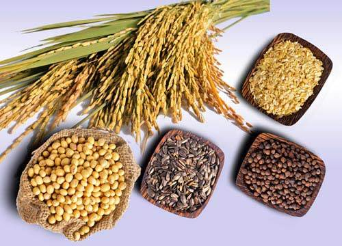 Seeds that have plenty of selenium are necessary minerals improving producibility.