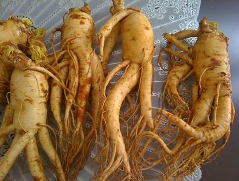 Pregnant women need to be careful in using ginseng in the first 3 months of pregnancy.