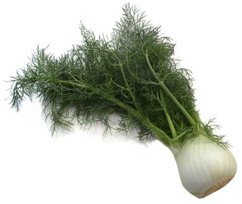 Fennel contains nutrients and antioxidants.