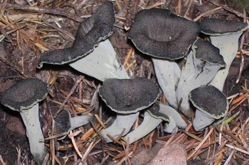 Black mushroom can prevent cadmium.