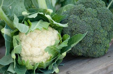 Broccoli and cauliflower are rich of vitamin C.