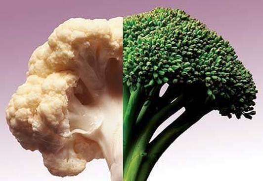 Description:  Different vegetables have different growing seasons