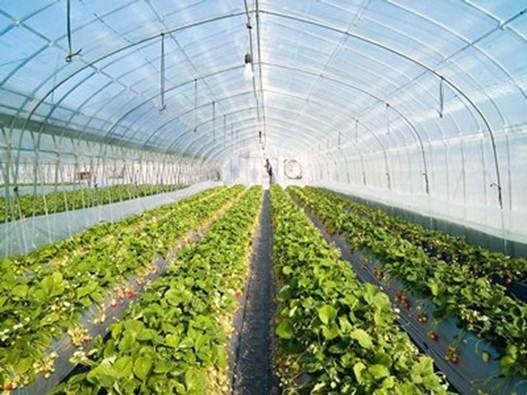 Description: When it comes to plant-based nutrition, most people envision long rows of organic farmland with luxurious stretches of leafy lettuces, kale, and other greens.