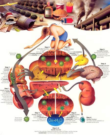 Description: Detoxication process