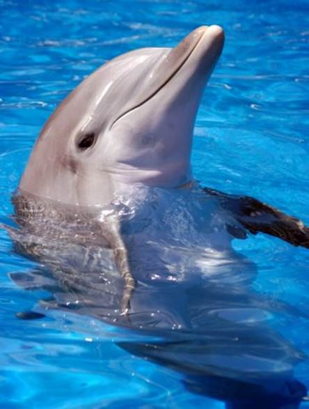Description: see whales and dolphins