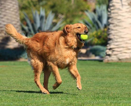 Your dog is the one running after the ball, right?