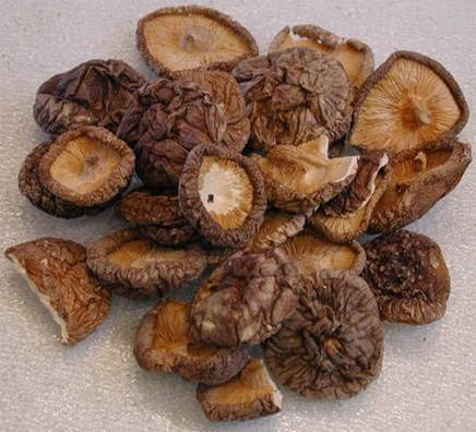Field mushroom has delicious taste and is rich of nutrition.