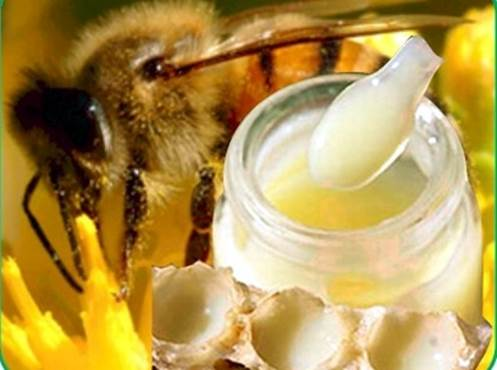Royal jelly is a special source of nutrients from nature.