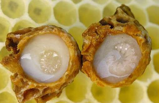 Royal jelly has form that is thick and it is milky, contains a lot of nutrients.