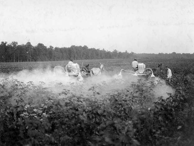 The EPA should phase out use of pesticides containing arsenic.