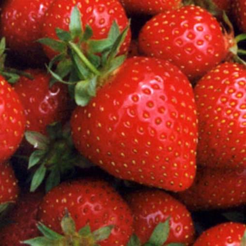 Description: http://3.bp.blogspot.com/_xcNHKZwD-54/S7pyc6_n3_I/AAAAAAAAAng/0c3zehBRDeE/s1600/strawberry.jpgStrawberries