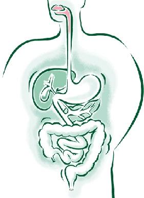 Description: Slow digestion
