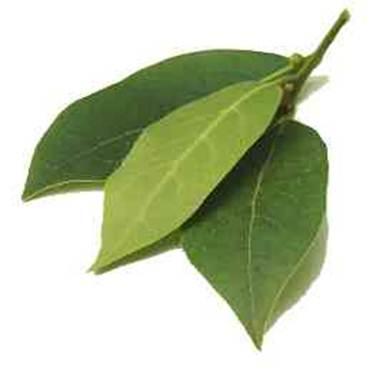 Description: bay leaves