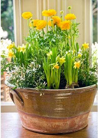 Description: Ranunculus, dwarf daffodils and jasmine conjure up sring