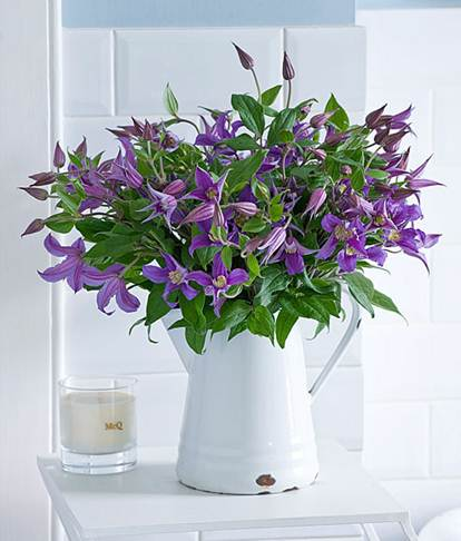 Description: Purple clematis and candle