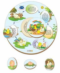 Description: Chicken and Egg