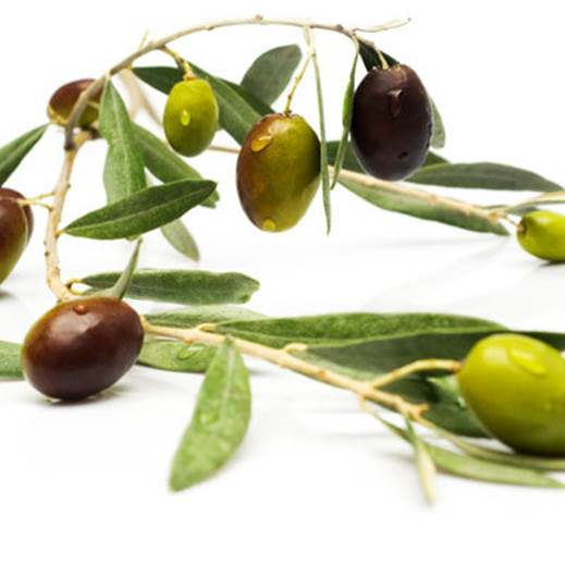 Healthy fats in olive oil can prevent genes that cause cancer.