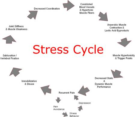 Description: The stress cycle