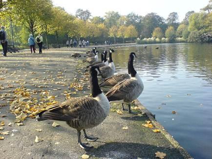 Description: Victoria Park