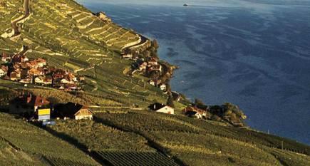 Description: Lavaux Vineyard