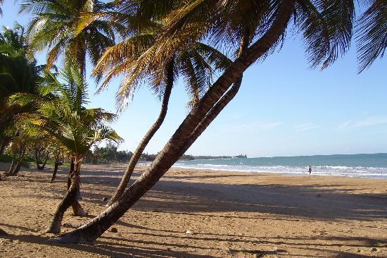 Description: Wyndham Rio Mar Beach