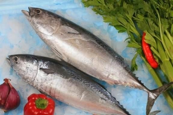 Tuna can easily contaminate scombrotoxin toxin.