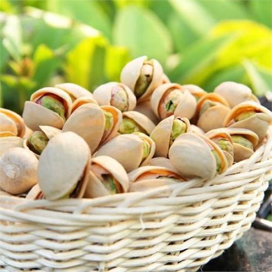 Smiling hazelnut is a source that is very rich of vitamin B6.