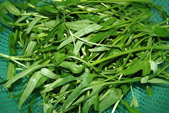 The Department of Plant Protection confirmed that the excess amount of BVTV found mostly in leafy vegetables like water spinach, collard greens and beans.
